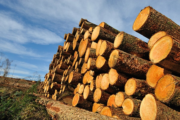 Lumber and Wood - KWS Manufacturing
